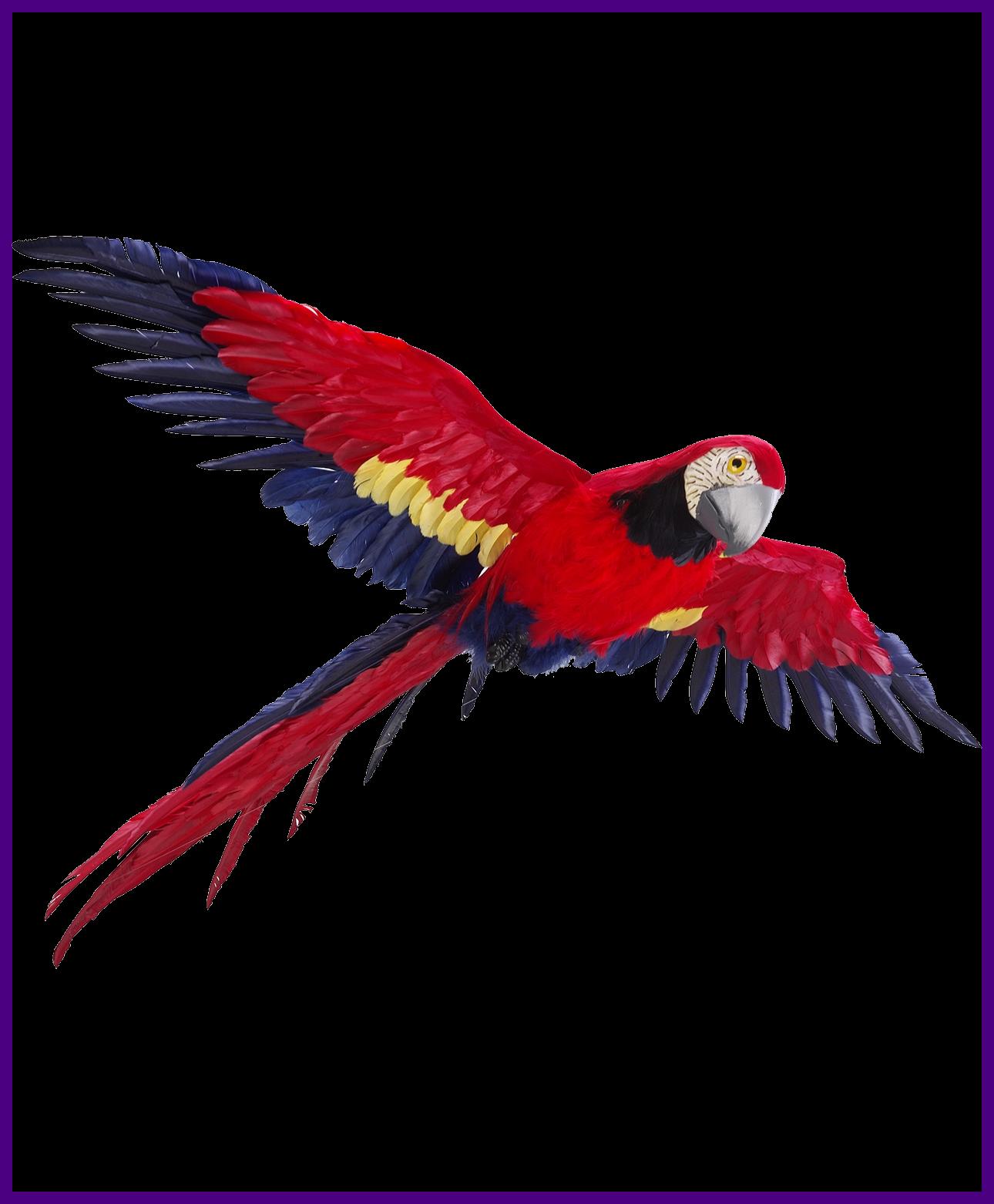 Best flying silhouettes transparent. Parrot clipart pair bird