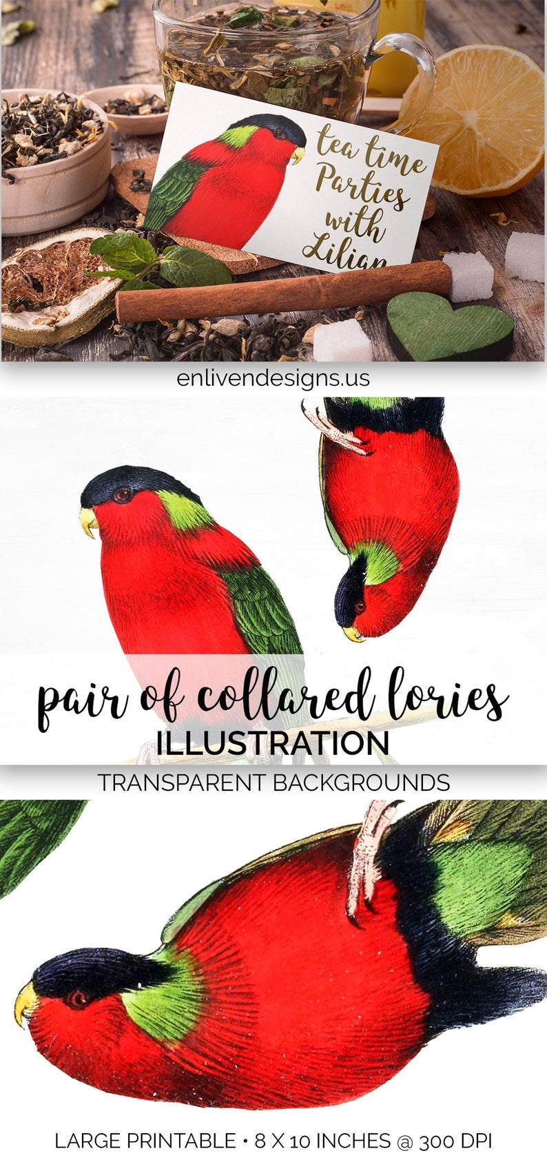 Of collared lories printable. Parrot clipart pair bird