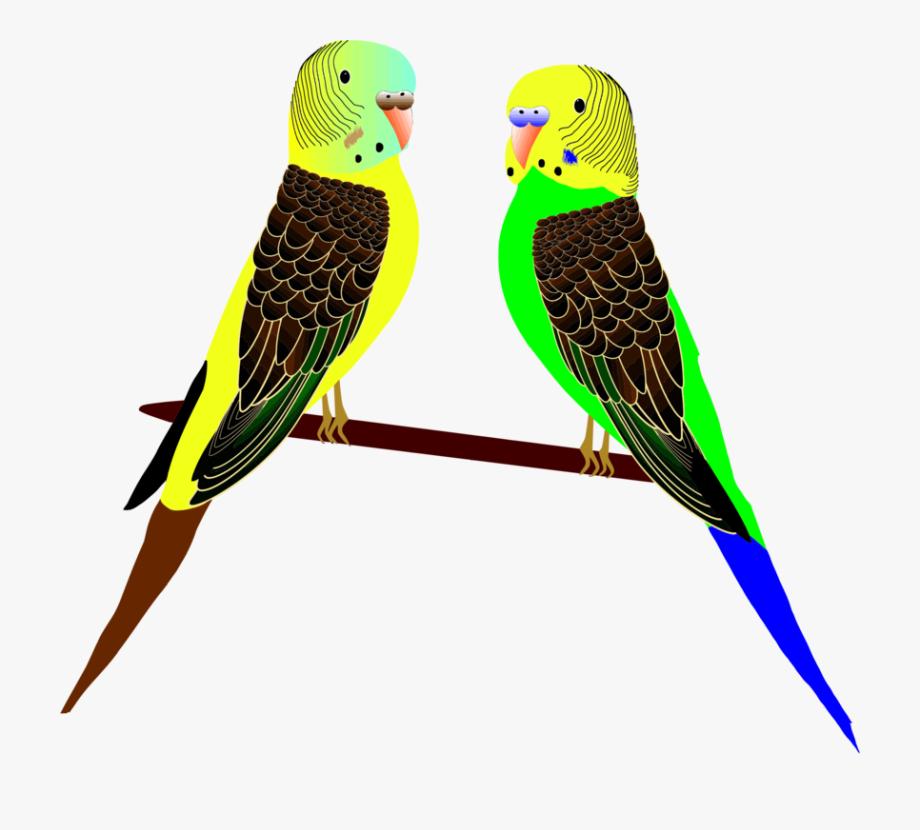 Parrot clipart parakeet. Animals art birds feathers