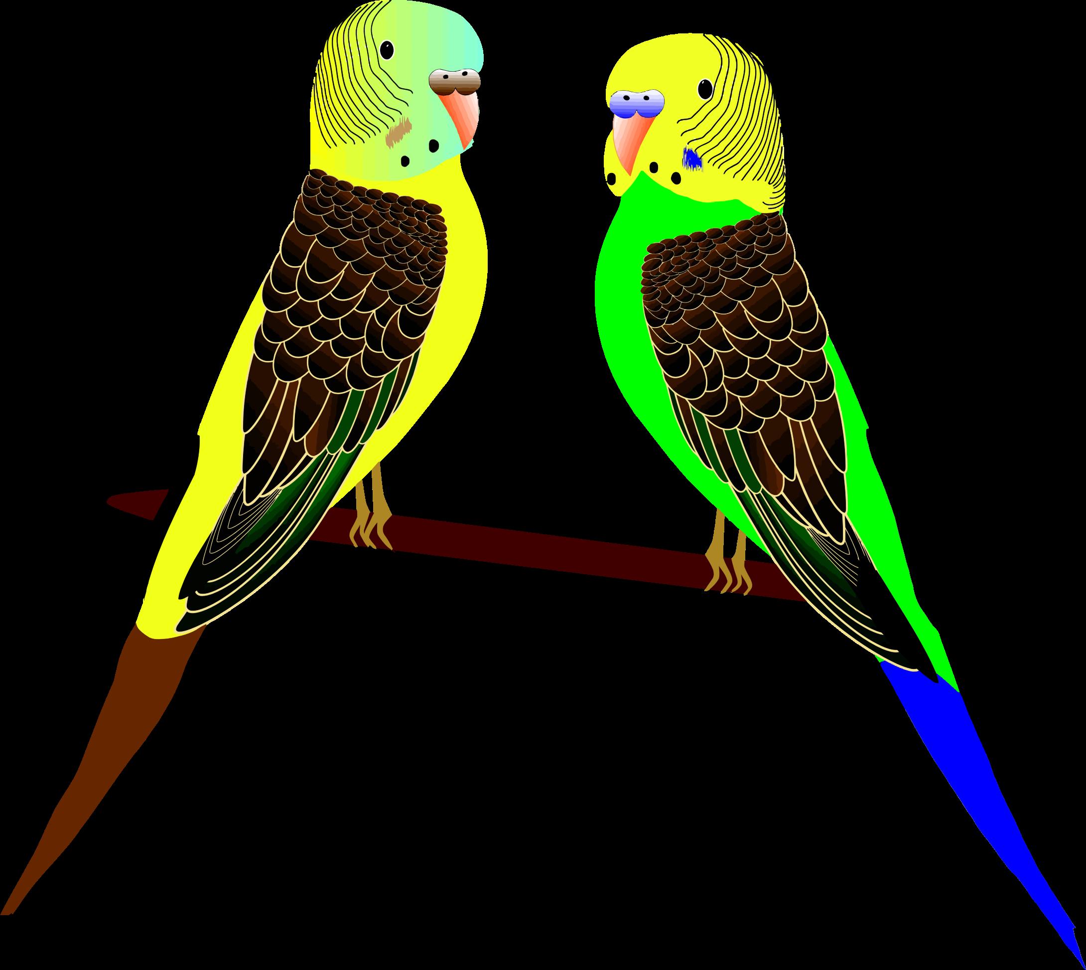 Parakeets illustration big image. Parrot clipart parakeet