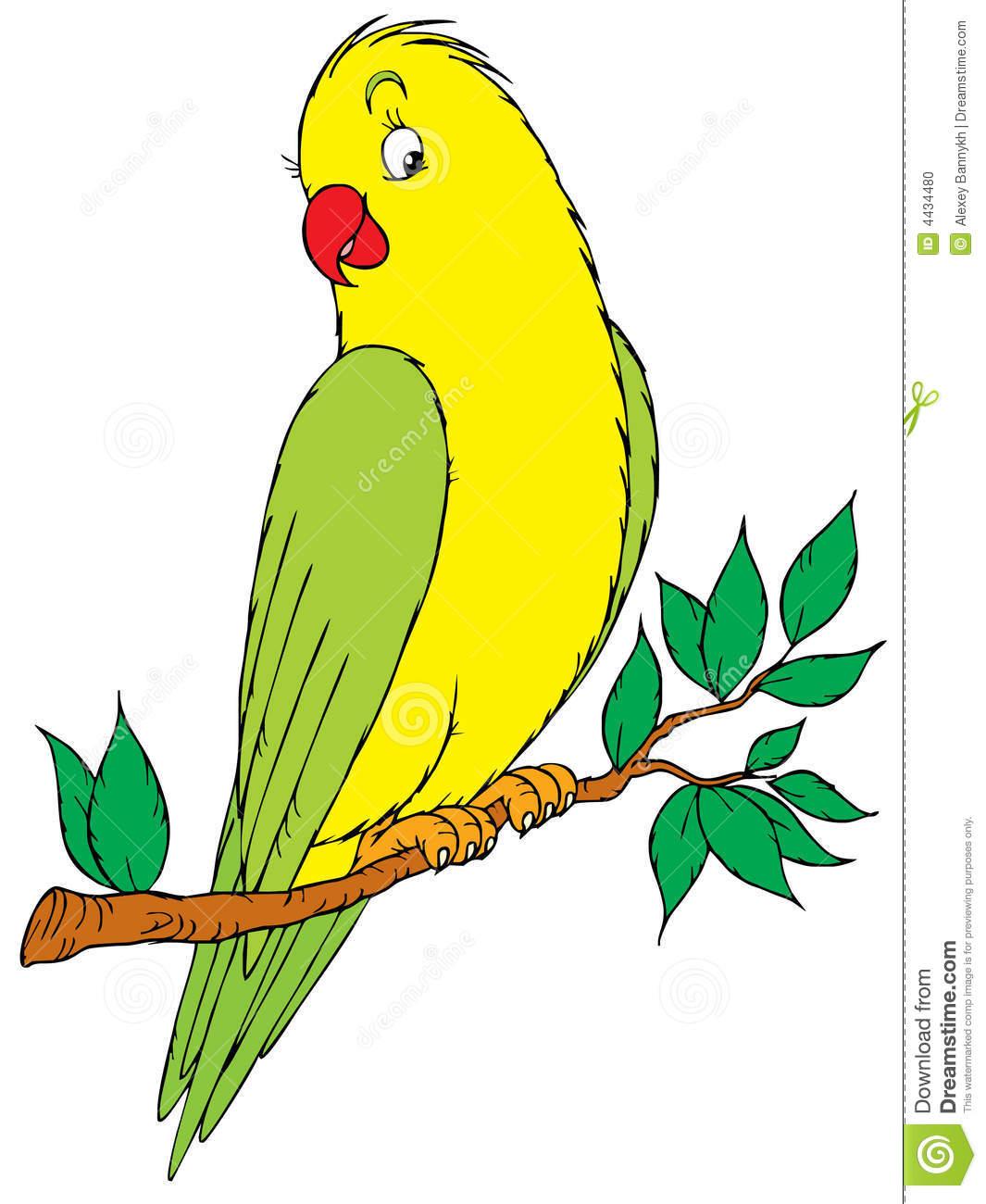 Parrot clipart parakeet.  clipartlook