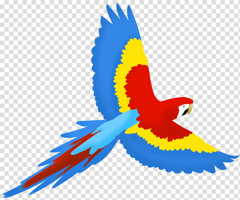Parrot clipart parrot feather. Dsk feathers and fins