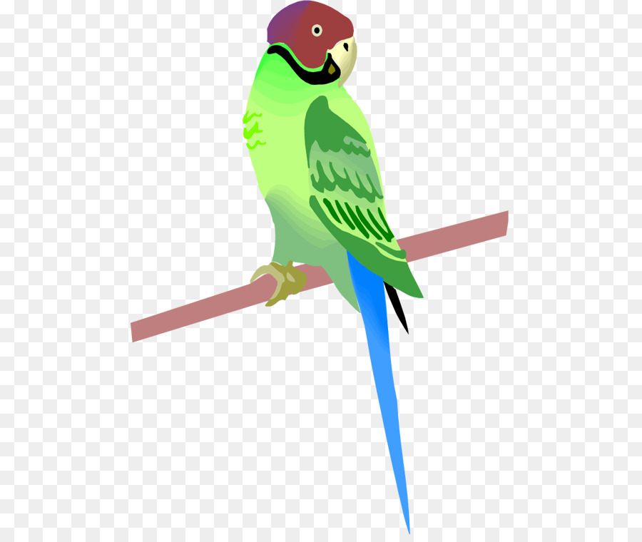 Parrot clipart parrot feather. Bird transparent