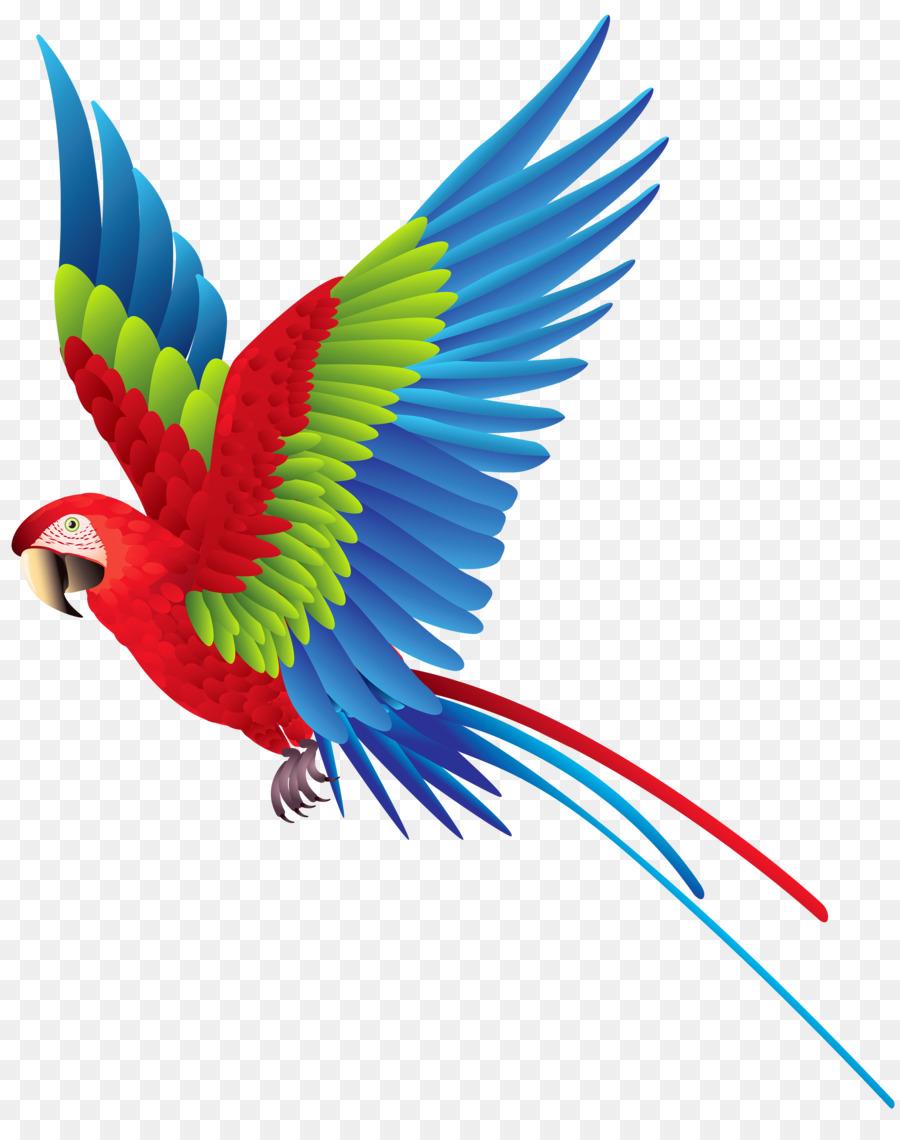 Bird transparent . Parrot clipart parrot feather