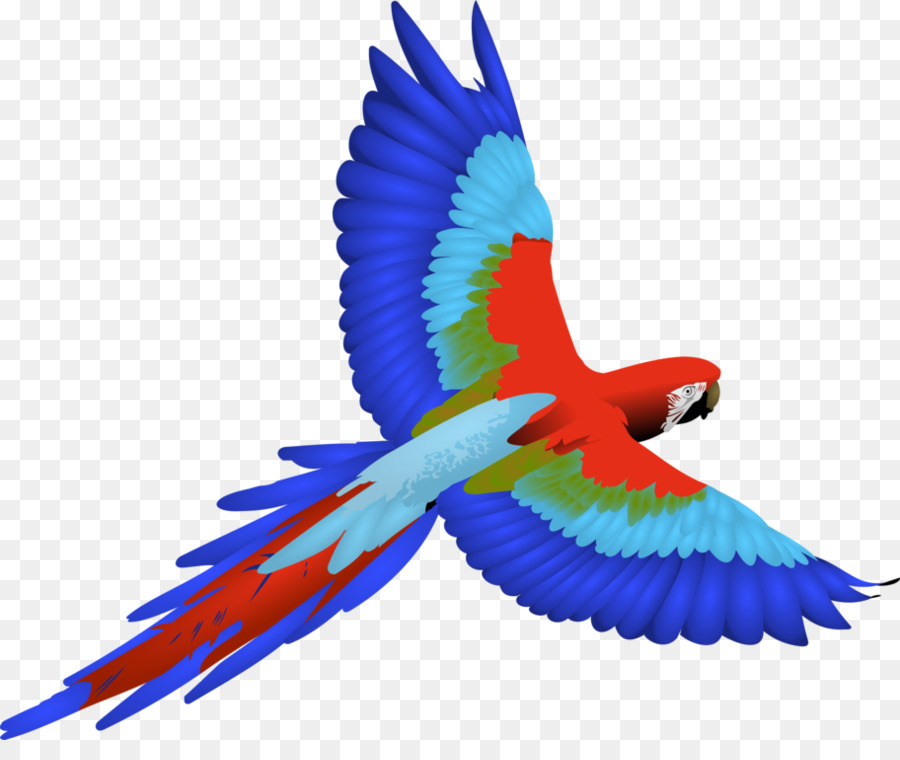 Bird transparent clip art. Parrot clipart parrot wing