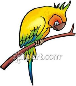 Looking down from his. Parrot clipart perch