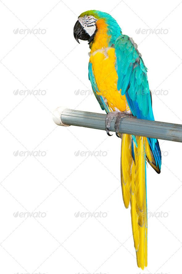 Colourful bird sitting on. Parrot clipart perch