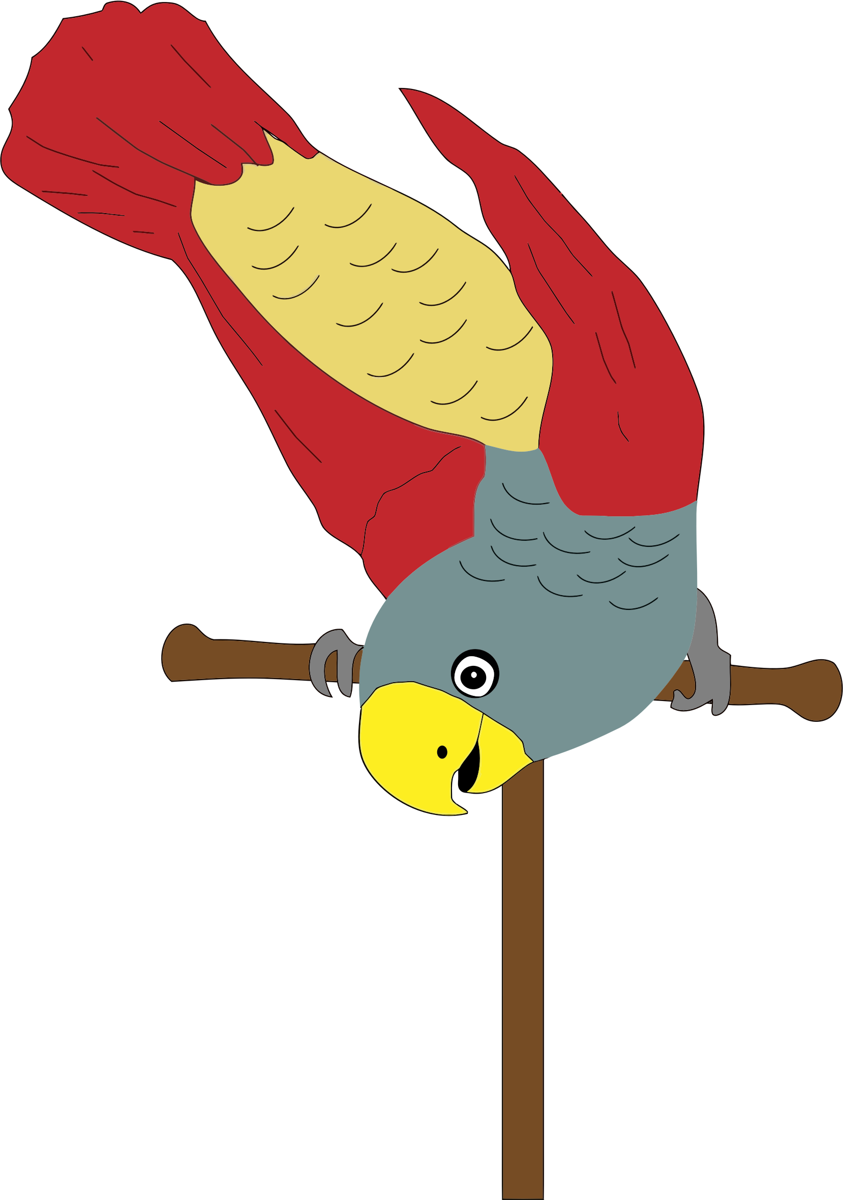Colorful on big image. Parrot clipart perch
