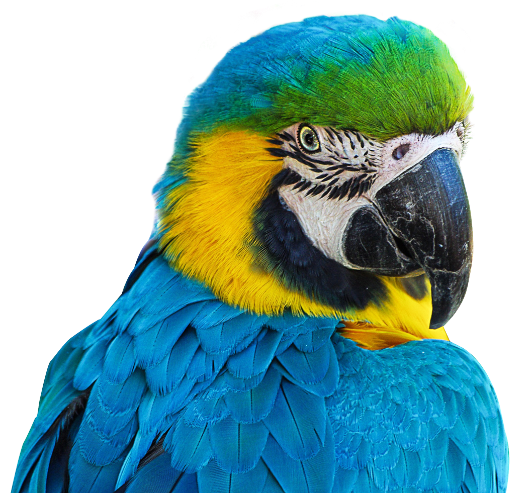 Png image purepng free. Parrot clipart perico