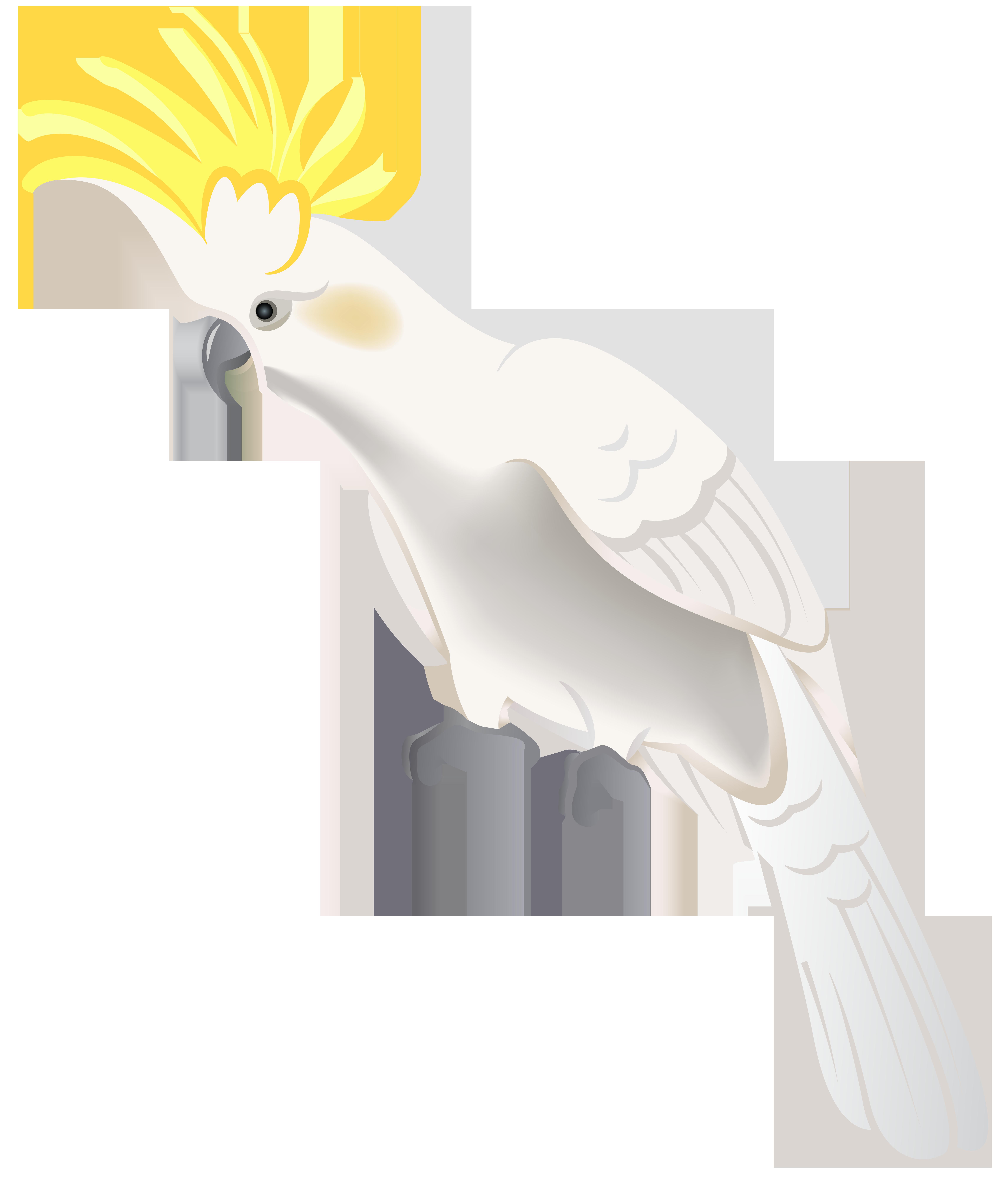 White clipart parrot. Png clip art best