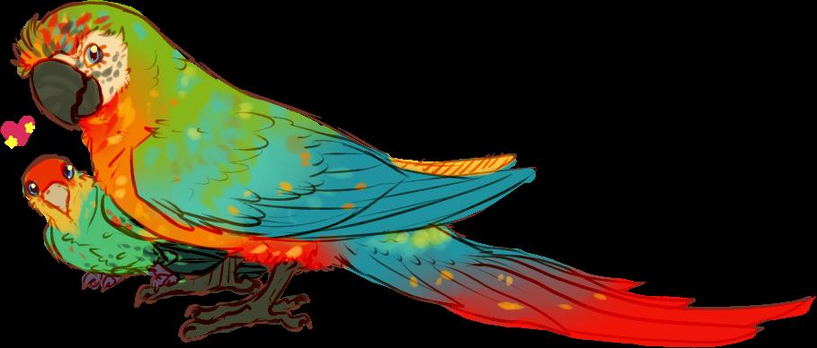 P g birbs weasyl. Parrot clipart rainbow