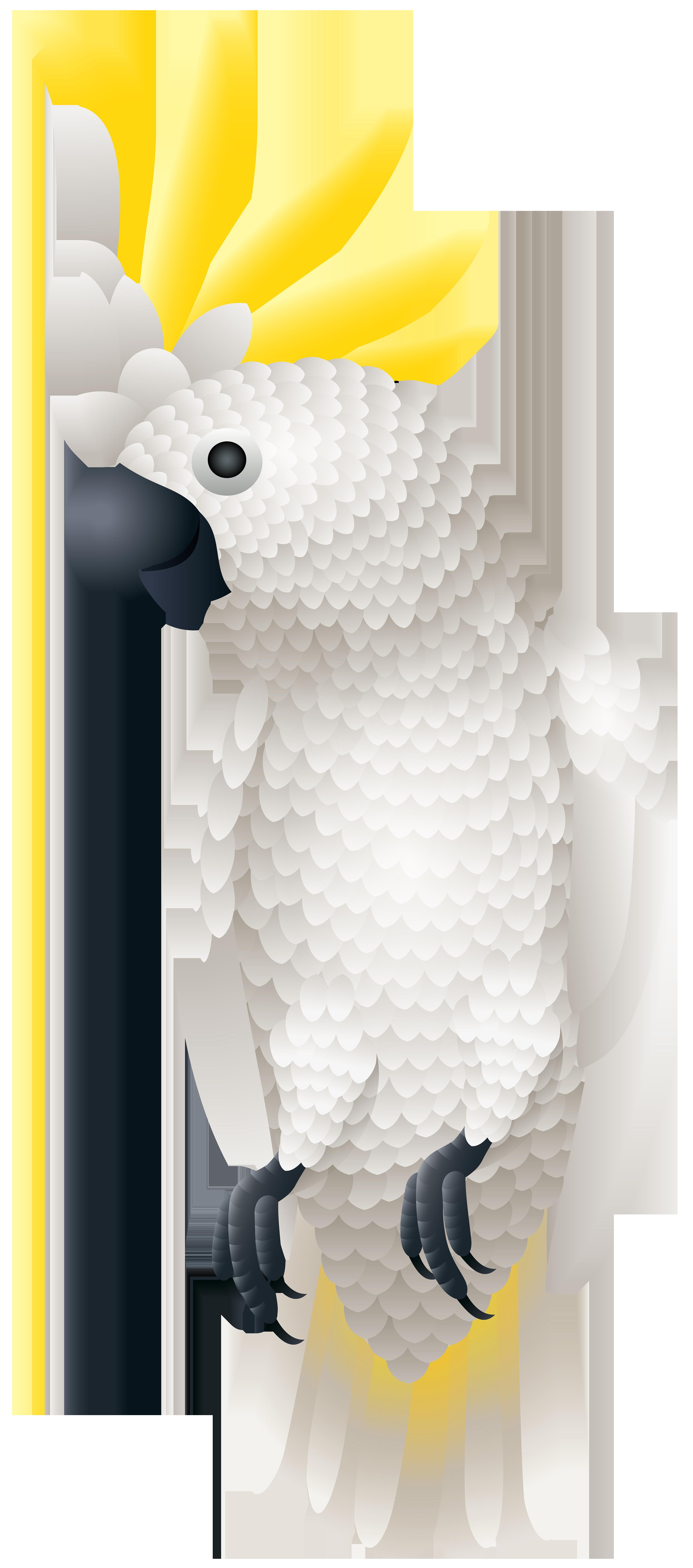 Kakadu png clip art. Parrot clipart rainbow
