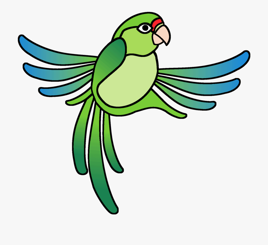 Parrot clipart rainforest parrot. Parakeet puerto rican
