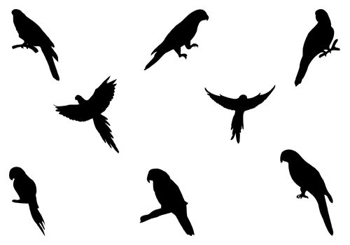 Parrot clipart silhouette. Clip art and macaw