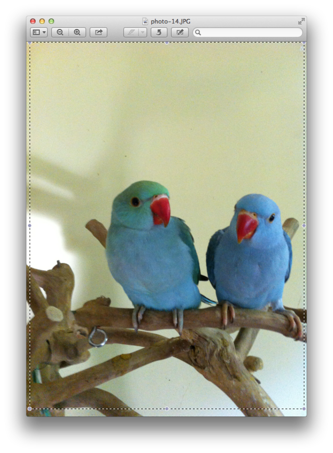 Parrot clipart sun conure. Parrots african greys amazons