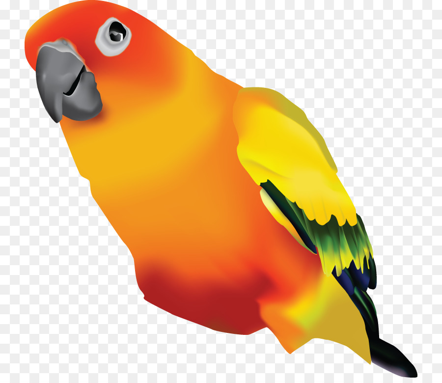 Parrot clipart sun conure. Bird feather transparent