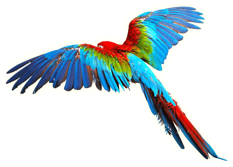 Bird scarlet macaw clip. Parrot clipart tail