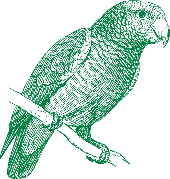 Parrot clipart tail. Green clip art at