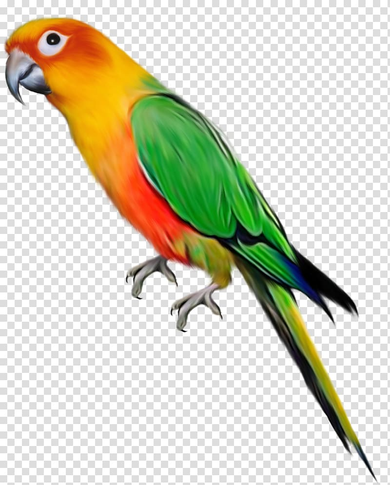 Parrot clipart three green. Lovebird transparent background png