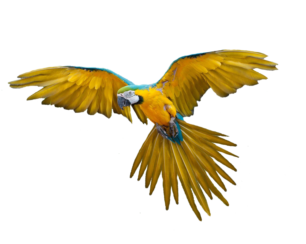 Flying Parrot Transparent PNG