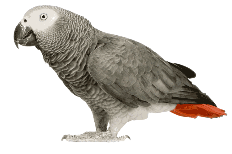 Parrot clipart wild bird. Home