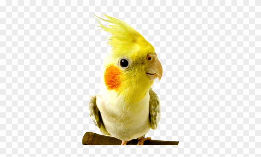 Birds at the vet. Parrot clipart wild bird
