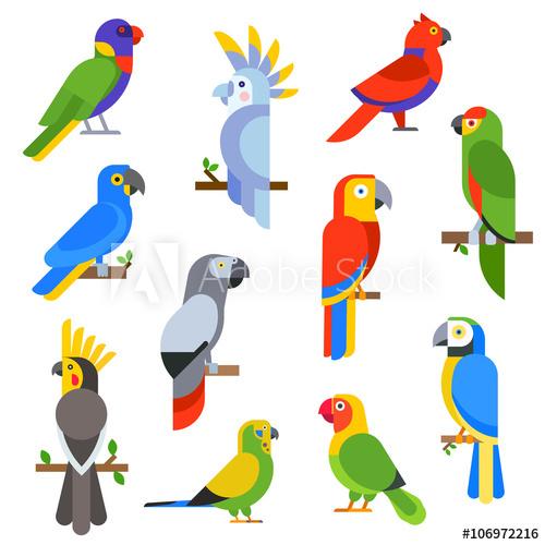 Parrot clipart wild bird. Cartoon parrots set and