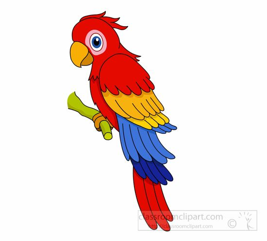 parrot clipart the top