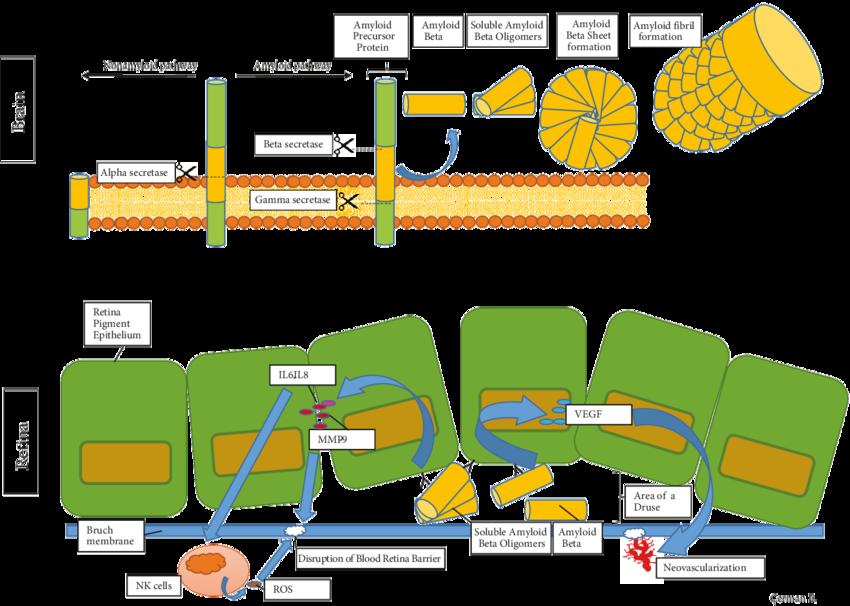 Pathway clipart green design. Figure the schematization of