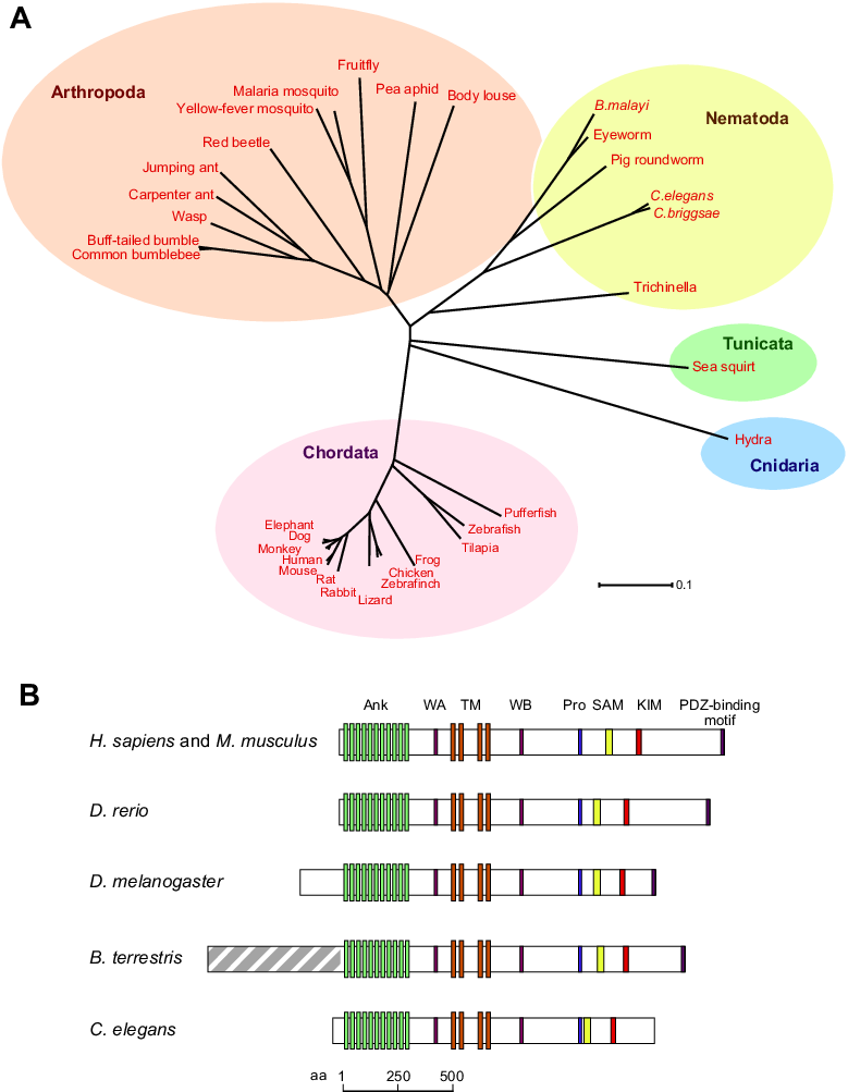 Kidins arms in evolution. Pathway clipart sequence