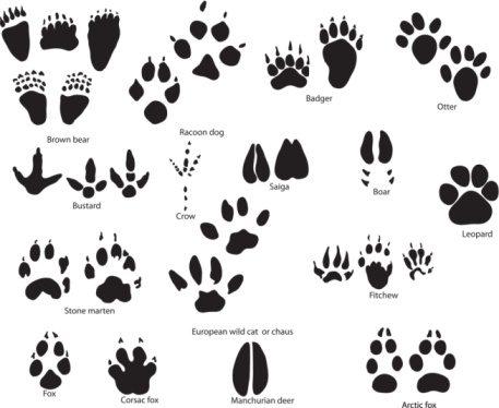 pawprint clipart animal