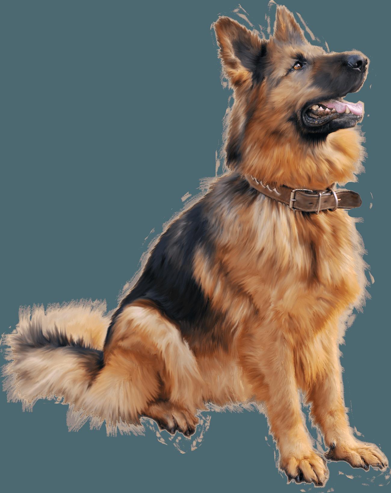Paw clipart german shepherd.  dog png image
