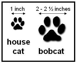 Free download clip art. Paw clipart house cat