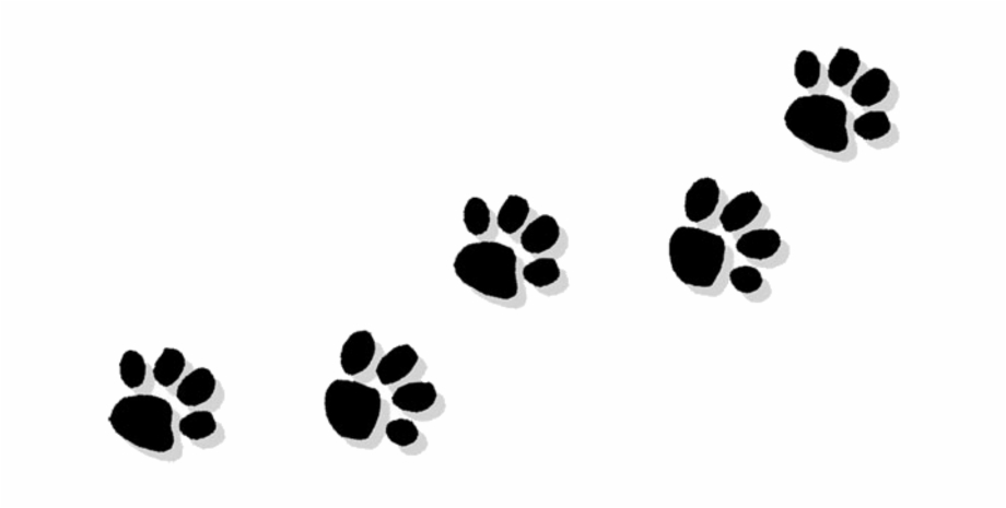 Pawprint clipart paw print. Download for free png