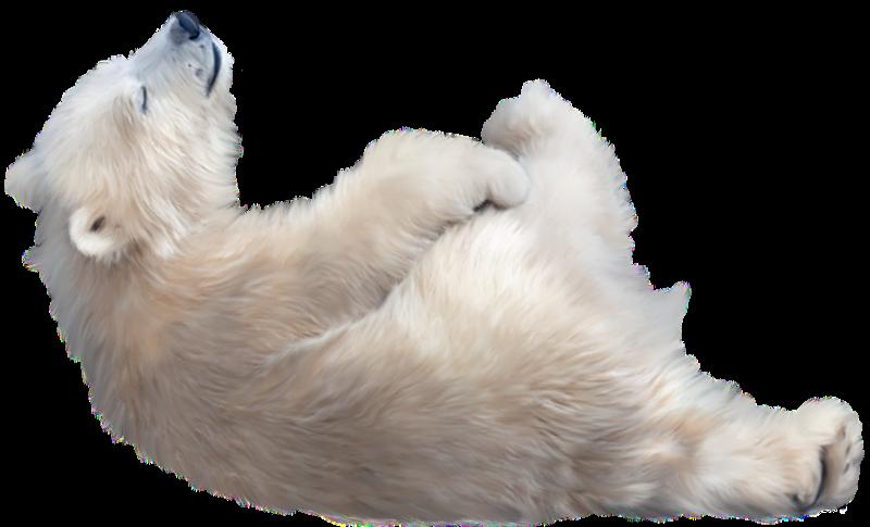 Wolf clipart translucent. Polar bear baby by