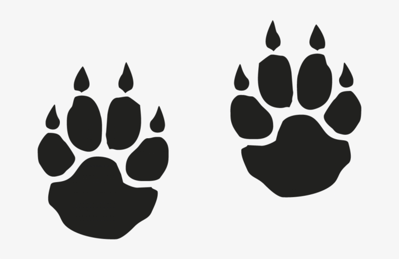 Free download tiger paw. Paws clipart saber