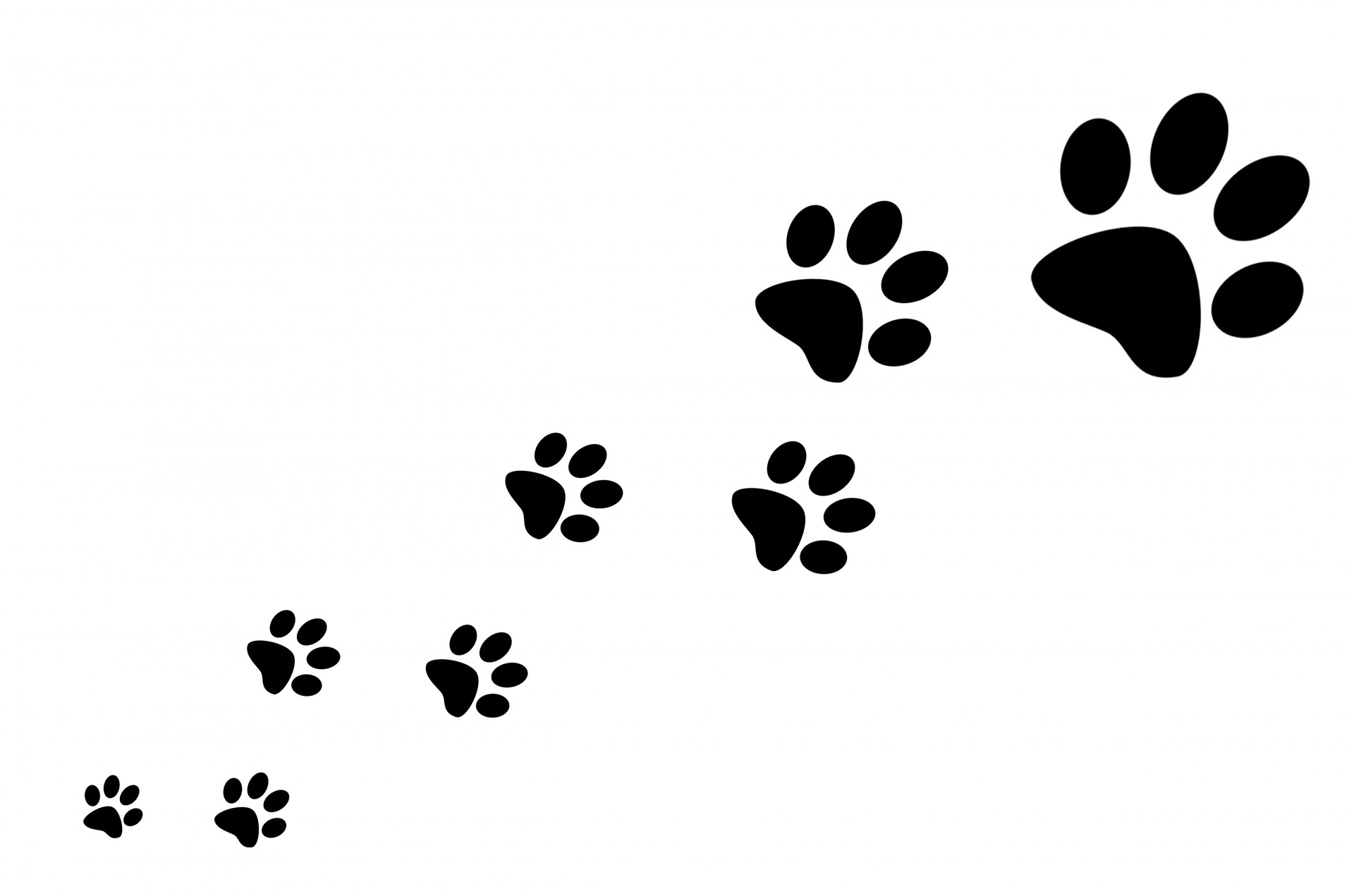 Free cat paw prints. Paws clipart spca