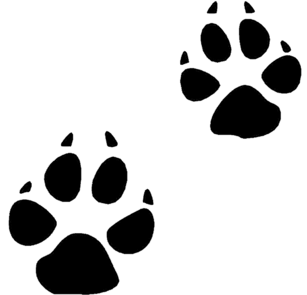 Trail clipart footprint. Bobcat track cliparts zone