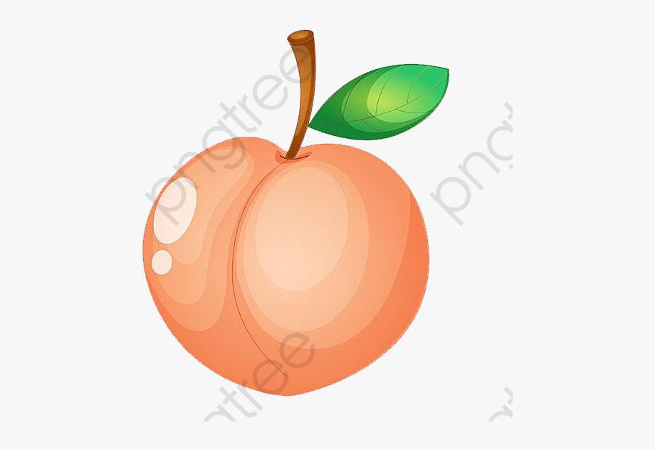 Peach fruit free cliparts. Peaches clipart durazno