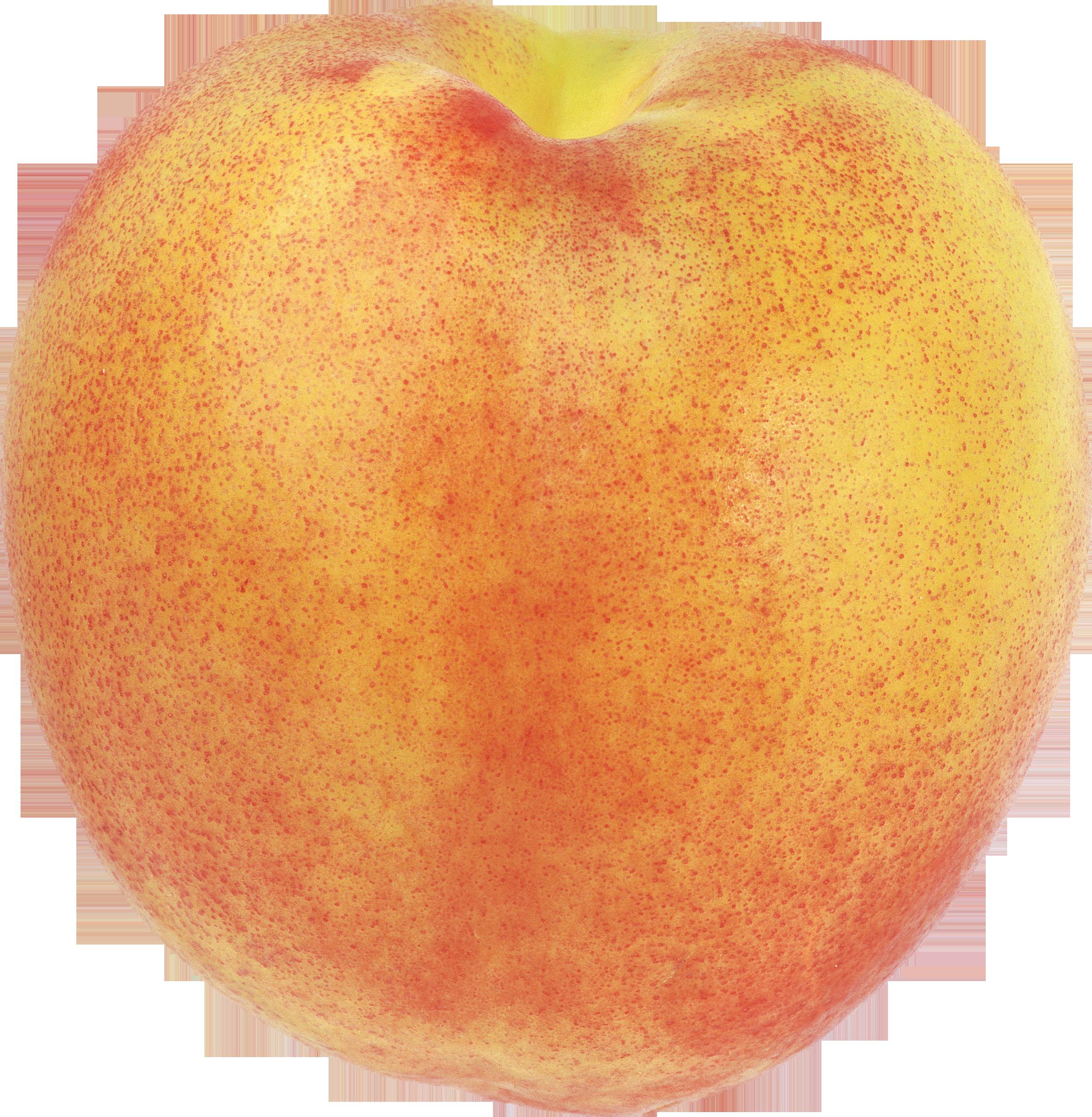 Peach four isolated stock. Peaches clipart outline