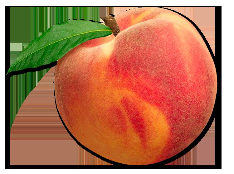 Peach clipart georgia peach. Picking peaches fishers orchard