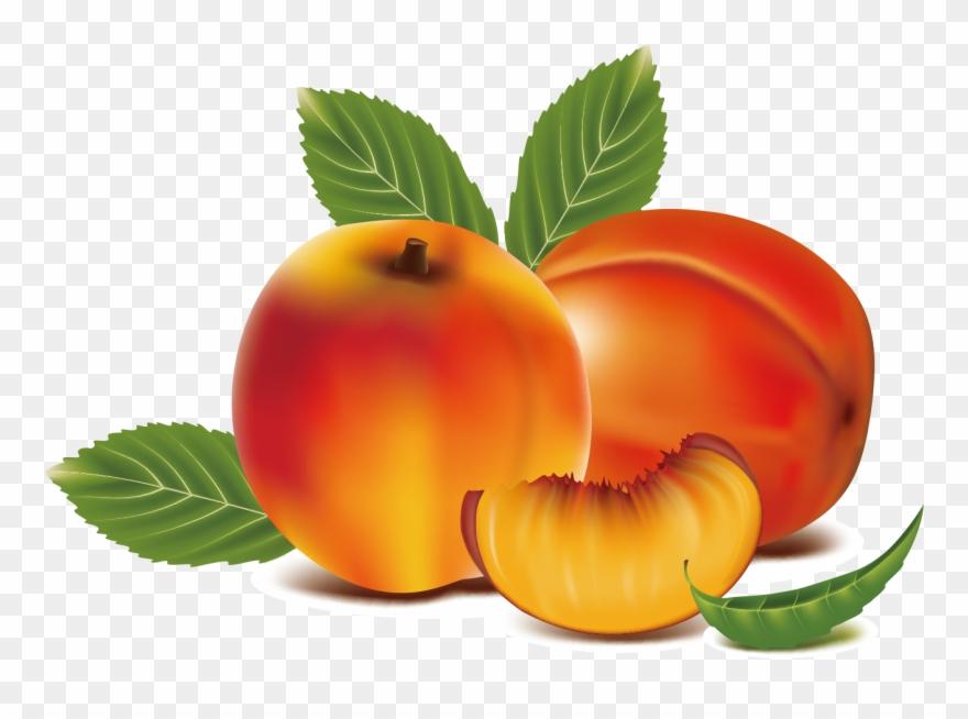 Clip art transprent png. Peach clipart peach fruit