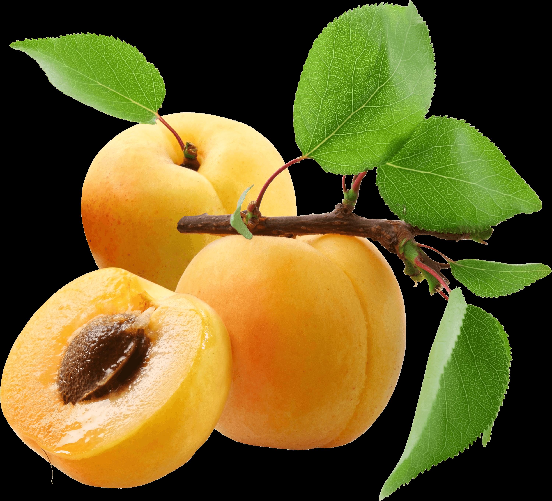 Three transparent png stickpng. Peaches clipart peach tree