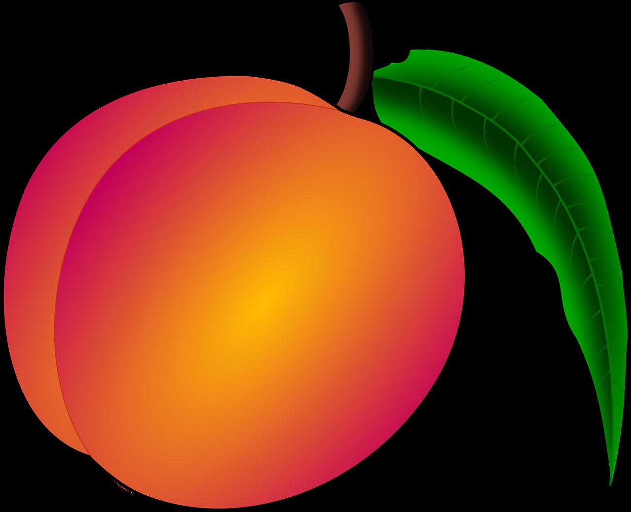 Peaches clipart durazno. Peach trees daniel szk