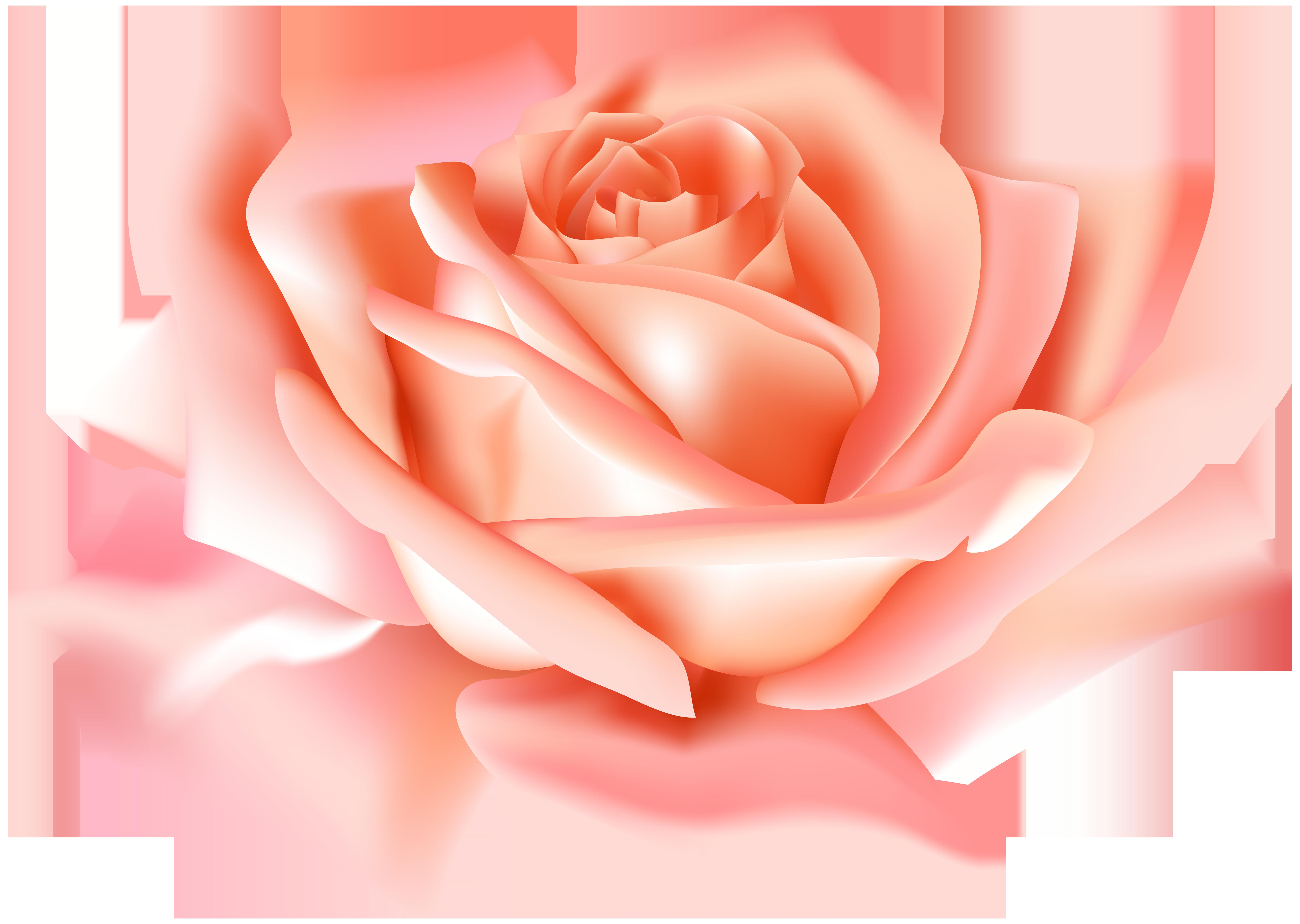 Garden roses flower clip. Pear clipart rose
