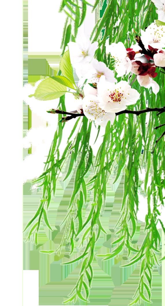 Floral design clip art. Peaches clipart stem