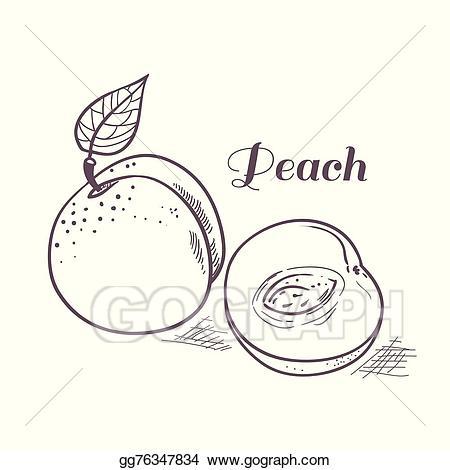 Peaches clipart outline. Vector art hand drawn