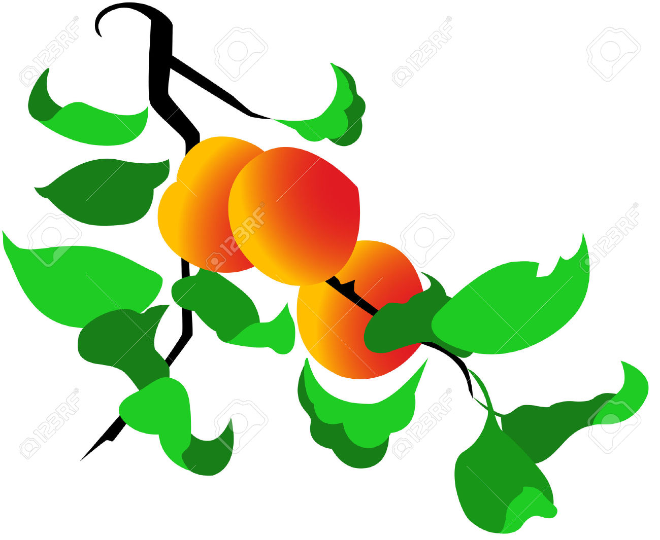 Peaches clipart peach tree. Cliparts free download best