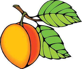 Free cliparts download clip. Peaches clipart peach tree