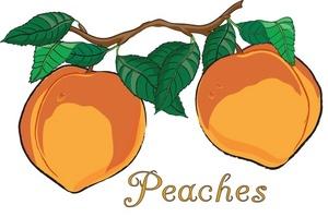 Peaches clipart peach tree. Free cliparts download clip